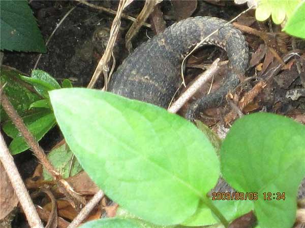 ヘビのようでもあるがウロコがくっきりしていて胴体がふくらんでいる。
